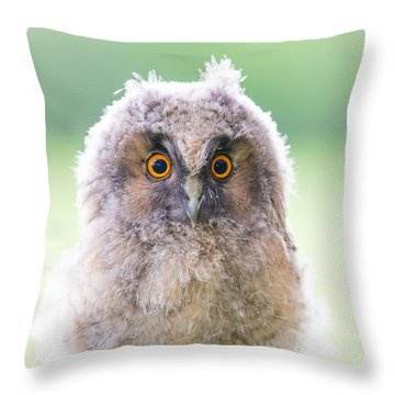 Baby Long-eared Owl Throw Pillow by Janne Mankinen