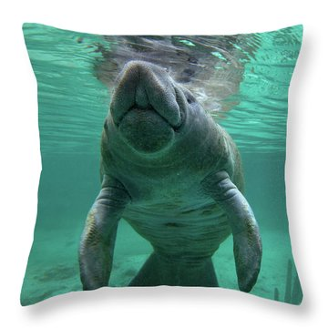 Baby Manatee Throw Pillow by Tim Fitzharris