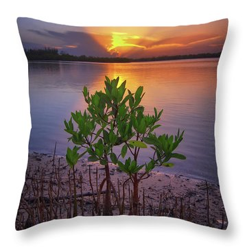 Baby Mangrove Sunset At Indian River State Park Throw Pillow by Justin Kelefas