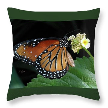 Baby Monarch Macro Throw Pillow by Felipe Adan Lerma