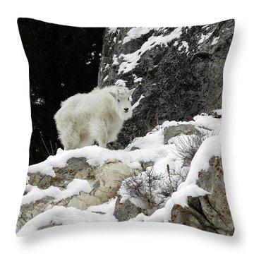 Baby Mountain Goat Throw Pillow