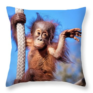 Baby Orangutan Climbing Throw Pillow by Stephanie Hayes