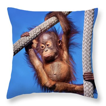 Baby Orangutan Hanging Out Throw Pillow by Stephanie Hayes