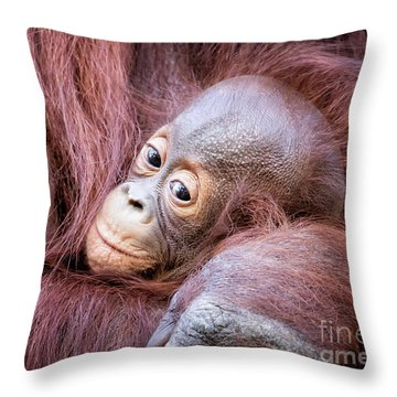 Baby Orangutan Throw Pillow by Stephanie Hayes