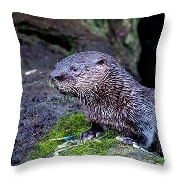 Baby Otter Throw Pillow by Kelly Marquardt
