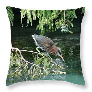 Baby Out On A Limb Throw Pillow