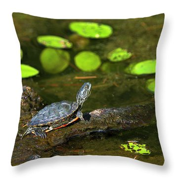 Baby Western Painted Turtle Throw Pillow