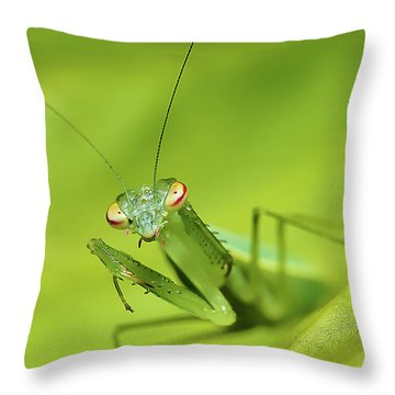 Baby Praymantes 6661 Throw Pillow by Kevin Chippindall