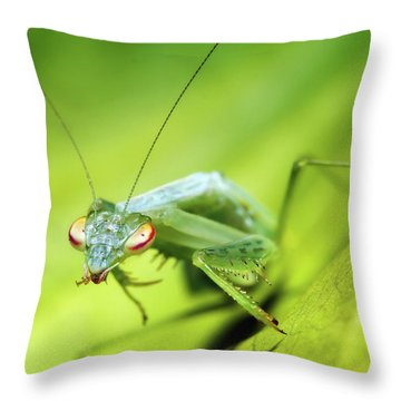 Baby Praymantes 6677 Throw Pillow by Kevin Chippindall