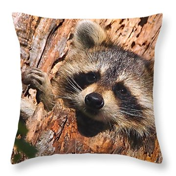 Baby Raccoon Throw Pillow by William Jobes