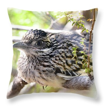Baby Roadrunner  Throw Pillow