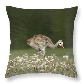 Baby Sandhill Crane Walking Through Wildflowers Throw Pillow