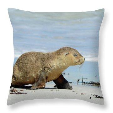 Baby Sea Lion On Seals Bay Throw Pillow