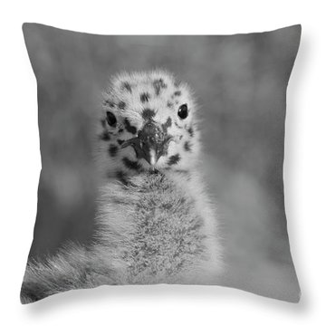 Throw Pillow featuring the photograph  Baby Seagull Spots    by John F Tsumas