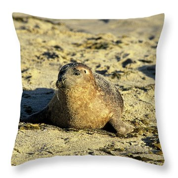 Baby Seal In Sand Throw Pillow