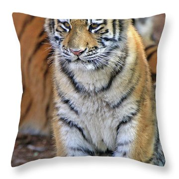 Baby Stripes Throw Pillow by Scott Mahon