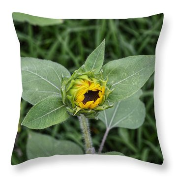 Baby Sunflower  Throw Pillow