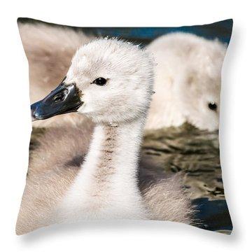 Baby Swan Close Up Throw Pillow