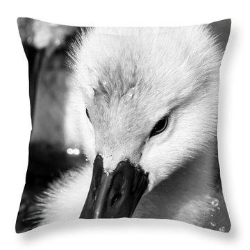 Baby Swan Headshot Throw Pillow