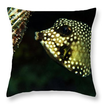 Throw Pillow featuring the photograph Baby Trunk Fish by Jean Noren