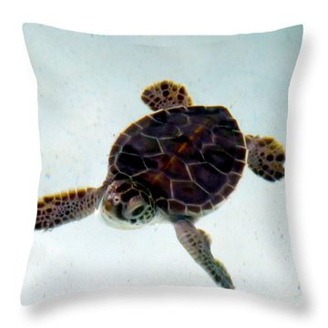 Throw Pillow featuring the photograph Baby Turtle by Francesca Mackenney
