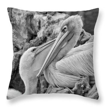 Baby White Pelican Talks To Mother White Pelican Throw Pillow