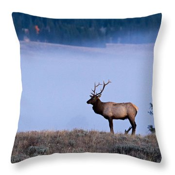 Bachelor Days Throw Pillow