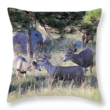Throw Pillow featuring the photograph Bachelor Pad by Shane Bechler