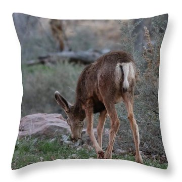 Throw Pillow featuring the photograph Back Into The Woods by Christy Pooschke