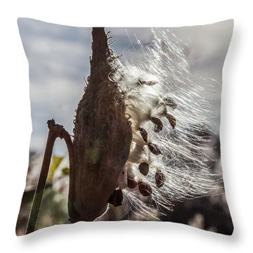Back Lit Milkweed Pod Throw Pillow