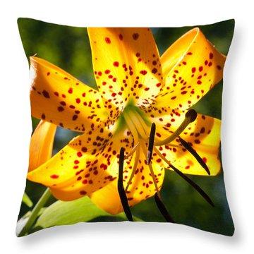 Back-lit Yellow Tiger Lily Throw Pillow by John Haldane