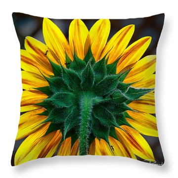 Back Of Sunflower Throw Pillow
