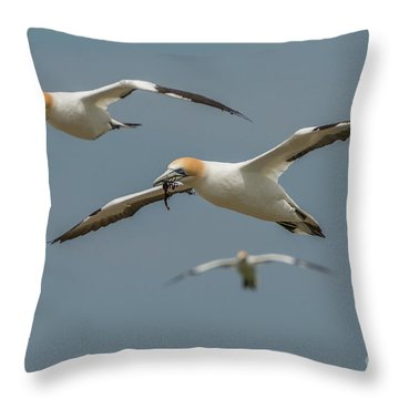 Throw Pillow featuring the photograph Back To The Colony by Werner Padarin