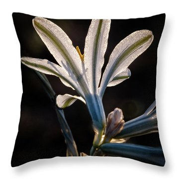 Throw Pillow featuring the photograph Backlit Ajo Lily by Robert Bales