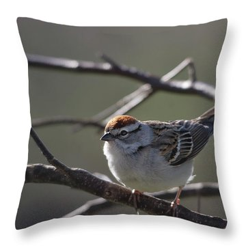 Throw Pillow featuring the photograph Backlit Chipping Sparrow by Susan Capuano