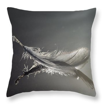 Backlit Feather Throw Pillow
