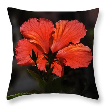 Throw Pillow featuring the photograph Backlit Hibiscus by Robert Bales
