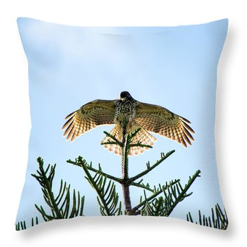 Backlit Landing Hawk Throw Pillow