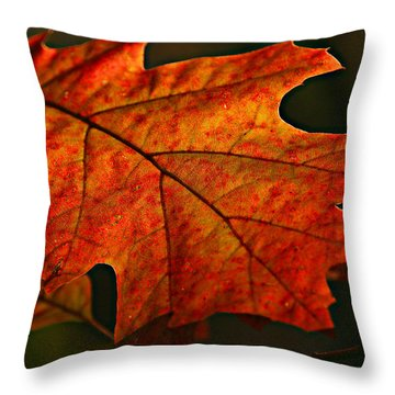 Throw Pillow featuring the photograph Backlit Leaf by Shari Jardina