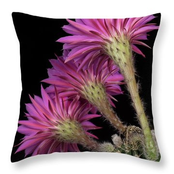 Throw Pillow featuring the photograph Backside Maria Piazza by Bryan Keil