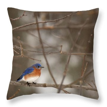 Backyard Blue Throw Pillow