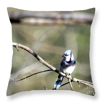 Backyard Blue Jay Throw Pillow