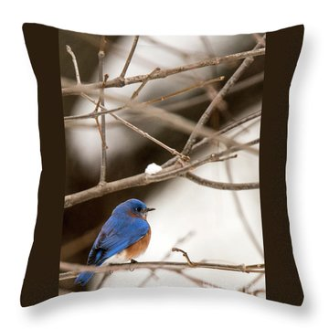 Backyard Bluebird Throw Pillow