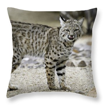 Backyard Bobcats Throw Pillow