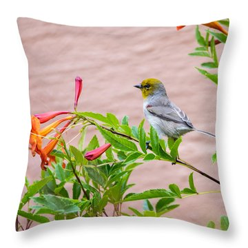 Throw Pillow featuring the photograph Backyard Verdin by Dan McManus