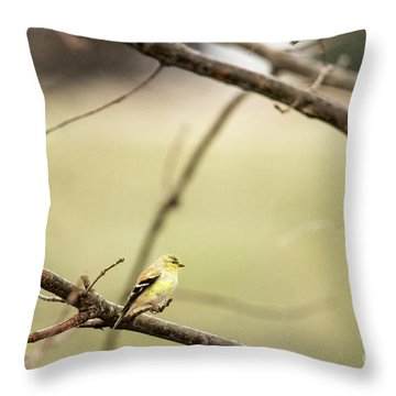 Backyard Yellow Throw Pillow