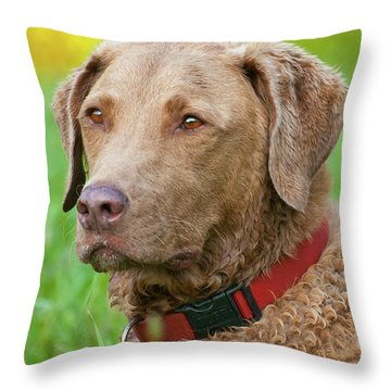 Throw Pillow featuring the photograph Bailee 1149 by Guy Whiteley