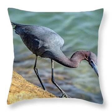 Balancing For Breakfast Throw Pillow