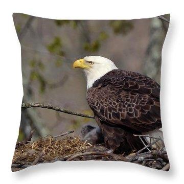 Bald Eage In Nest Throw Pillow by Ann Bridges