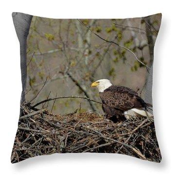 Bald Eagle 01 Throw Pillow by Ann Bridges